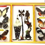 Butterflies and mosaic